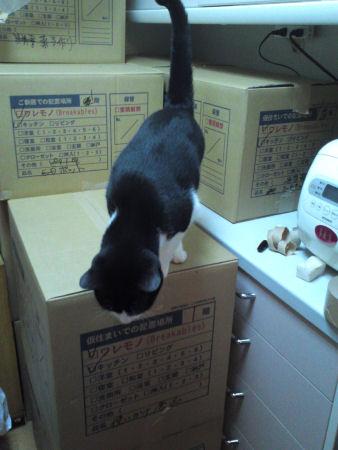 blog100826引っ越しペコ-1.jpg
